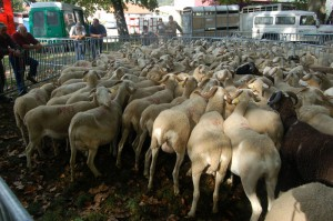 There has been a sheep market in Tarascon since at least 1158