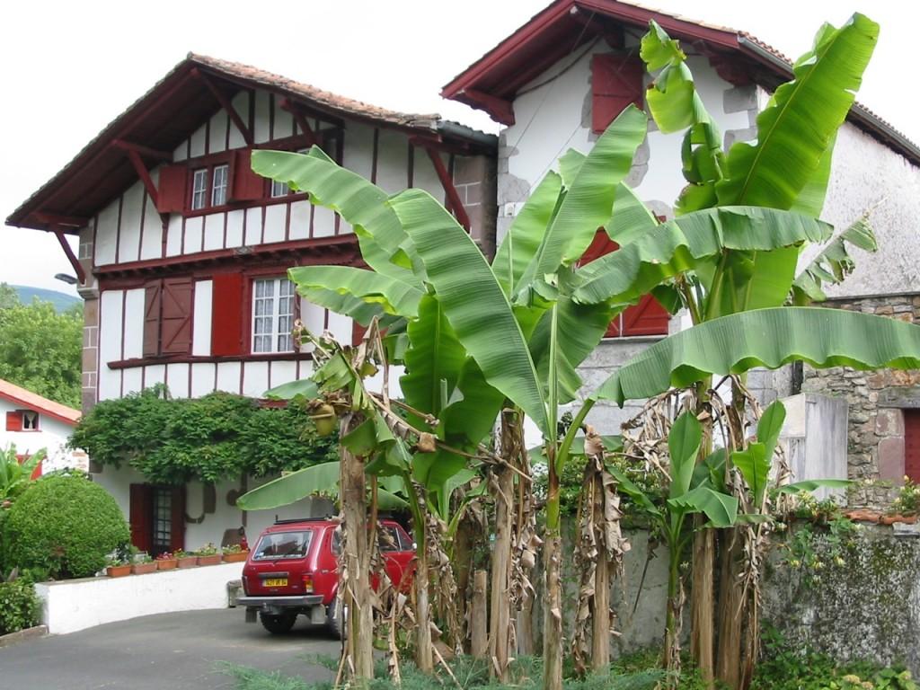Bananiers devant un etxe basque classique à Ainhoa (pays basque)