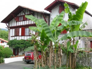 Banana trees in front of classic Basque etxe (houses) in the foothills of the Pyrenees
