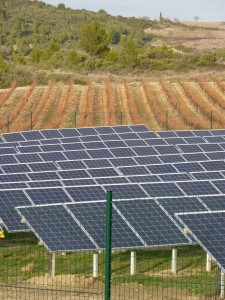 Three layers: garrigue, vines and solar panels