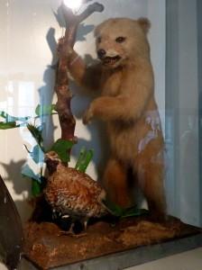 Ourson dans le musée à Luchon
