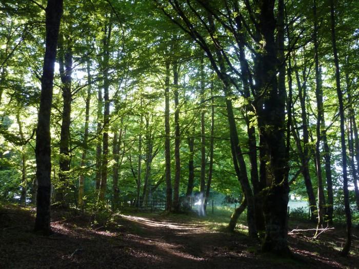 La forêt pyrénéenne, côté espagnol, en expansion constante grâce à la déprise pastorale