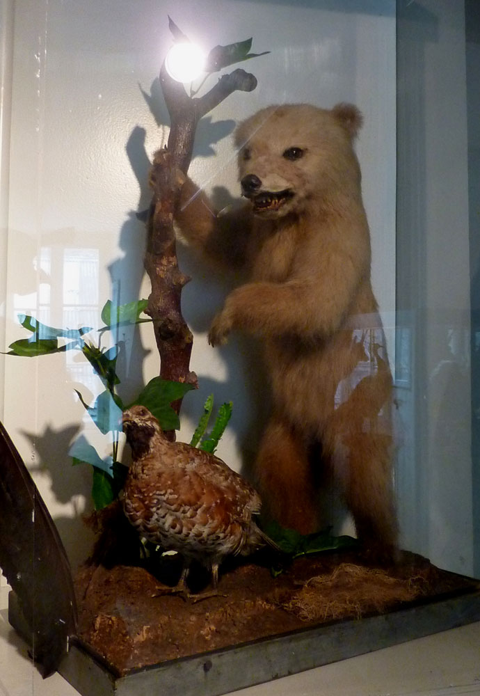Stuffed bear cub in Luchon museum