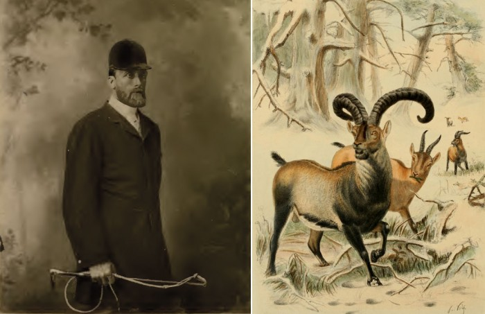 Left: Sir Victor Brooke, 1885 lived in Pau just north of the PyreneesRight: Plate 22 (Spanish Tur) from Richard Lydecker (1898) Wild oxen, sheep and goats of all lands, living and extinct. Based on a sketch by Joseph Wolf in the possession of Lady Brooke.
