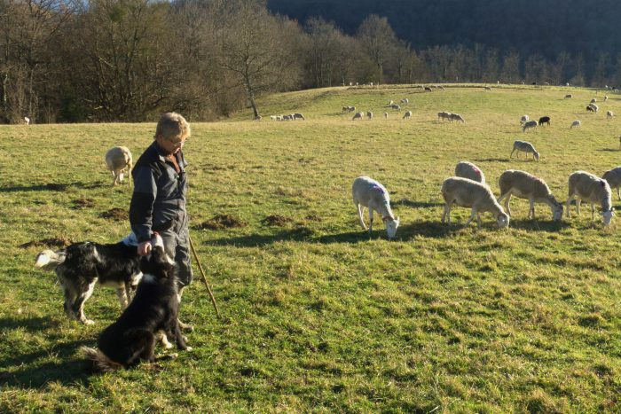 Gisèle Gouazé with part of the flock grazing on their winter pasture in Betchet