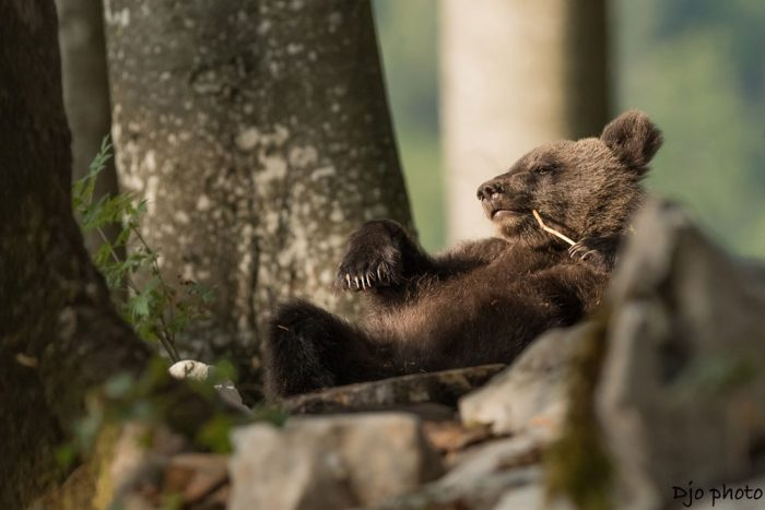 Bear cub. Photo: Djo