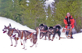 Dog sledding in the Pyrenees