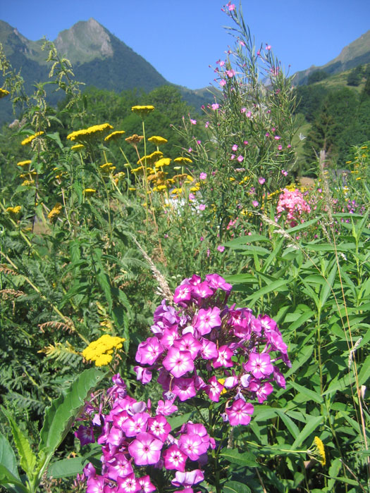 Flower border at Raufaste, near Couflens, in Ariège